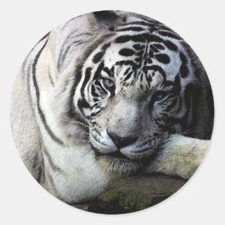 White Tiger Stare Sticker