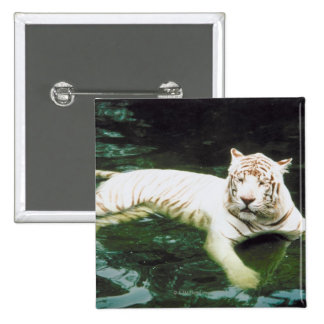 White Tiger Swimming Peacefully Button
