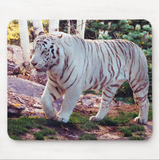 White Tiger Walking 3 - Mouse Pad