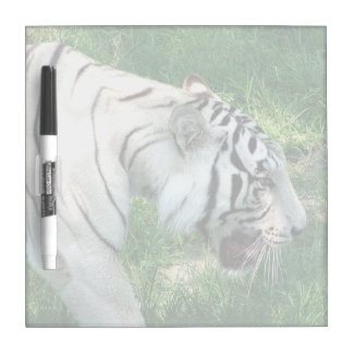 White Tiger walking by Susan L Marsh Dry Erase Whiteboard