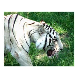White Tiger walking by Susan L Marsh Letterhead