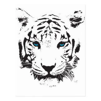 White Tiger with Blue Eyes Postcard