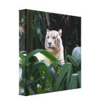 White Tiger  Wrapped Canvas Gallery Wrapped Canvas
