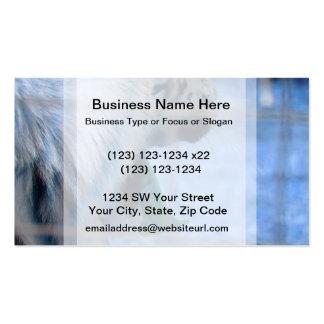 white tiger yawn blue side large cat animal image business card