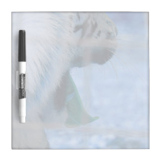 white tiger yawn blue side large cat animal image dry erase boards