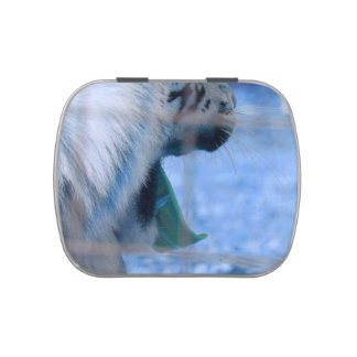 white tiger yawn blue side large cat animal image jelly belly candy tins