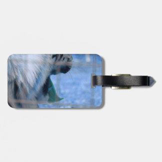 white tiger yawn blue side large cat animal image tags for luggage