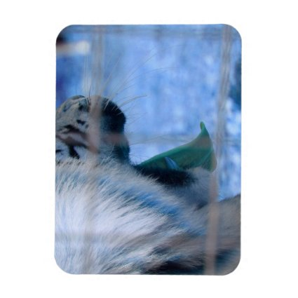 white tiger yawn blue side large cat animal image flexible magnet