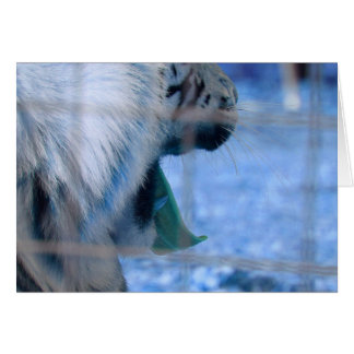 white tiger yawn blue side large cat animal image stationery note card