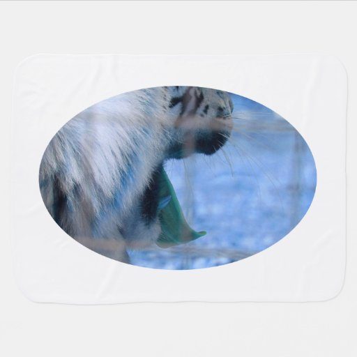 white tiger yawn blue side large cat animal image receiving blankets