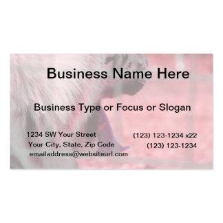 white tiger yawn pink side animal image business card
