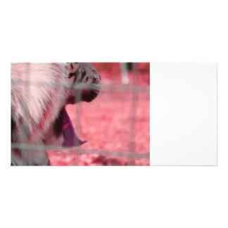 white tiger yawn pink side animal image photo card