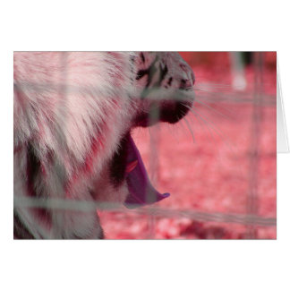 white tiger yawn pink side animal image stationery note card