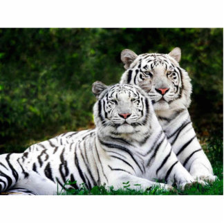 White Tigers Photo Sculpture