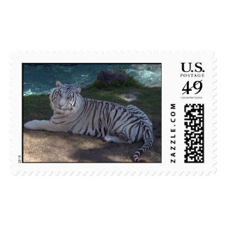 White Tigers Postage Stamp