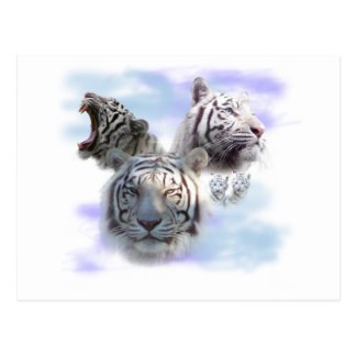 White Tigers Postcard