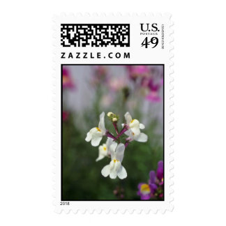 white Toadflax (Linaria Maroccana) flowers Stamps