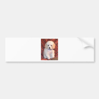 White Toy Poodle Fluffy Puppy Bumper Sticker