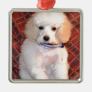 White Toy Poodle Fluffy Puppy Metal Ornament