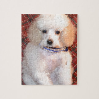 White Toy Poodle Fluffy Puppy Jigsaw Puzzle