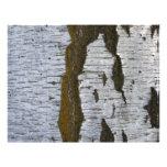 White Tree Bark Scrapbooking Paper 11x8.5 Personalized Letterhead