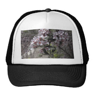 White Tree Blossom With A Hint Of Pink Trucker Hat