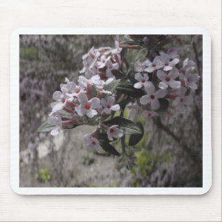 White Tree Blossom With A Hint Of Pink Mousepads