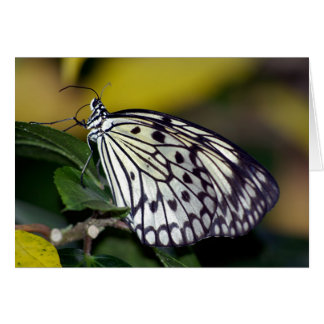 White Tree Nymph Butterfly  Card
