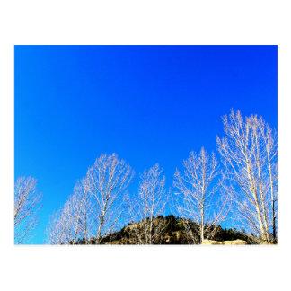 """""""White trees, blue skies"""" Postcard"""