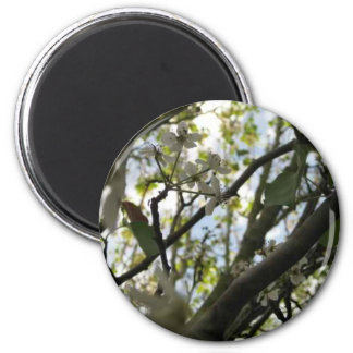 White Trees Magnet