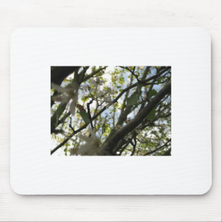 White Trees Mouse Pad