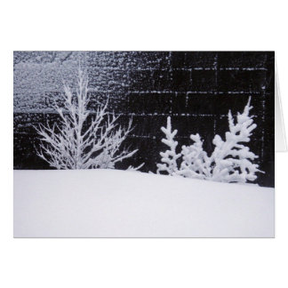 White trees of Iceland Card