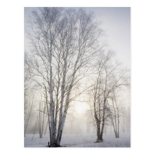 White Trees on a Snowy Day Postcard