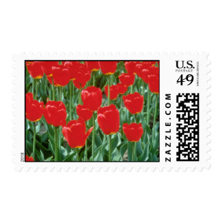 White Triumph tulips Mexico flowers Stamp