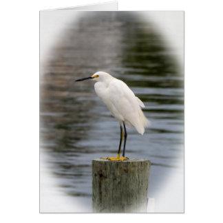 White Tropical Bird Card