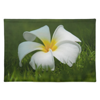 White tropical flower (frangipani) close up 2 placemat