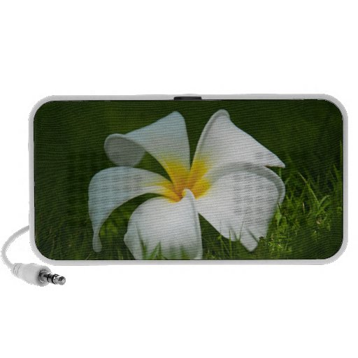 White tropical flower (frangipani) close up 2 notebook speakers
