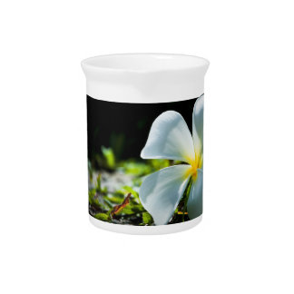 White tropical flower (frangipani) close up drink pitcher