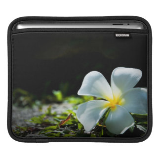 White tropical flower (frangipani) close up iPad sleeve