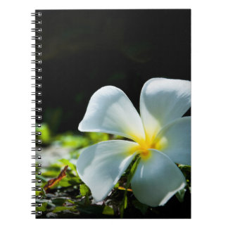 White tropical flower (frangipani) close up spiral note book