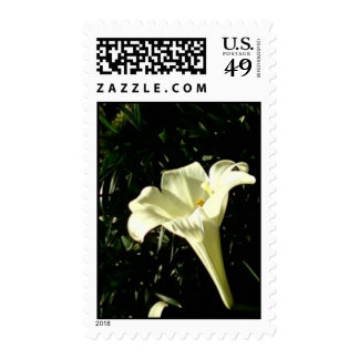 White Trumpet Lily Stamp