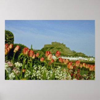 White Tulip flowered at Gorey flowers Print
