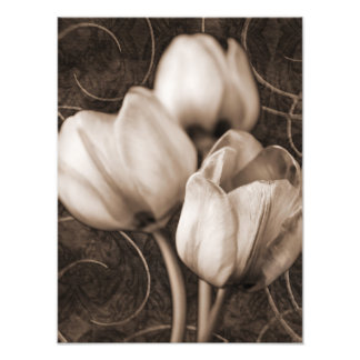 White Tulip Flowers Sepia Black Background floral Art Photo