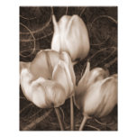 White Tulip Flowers Sepia Black Background floral Photo Print