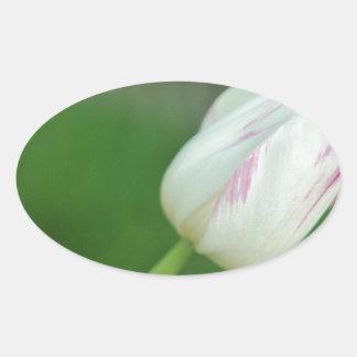 White Tulip Oval Sticker