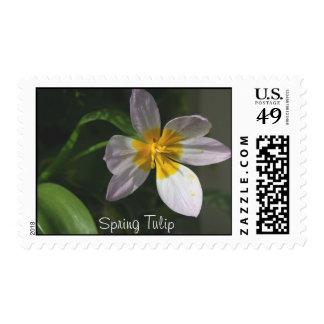 White Tulip Postage
