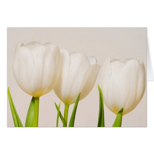 White tulips against a white background, card