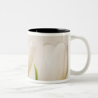White tulips against a white background, Two-Tone coffee mug