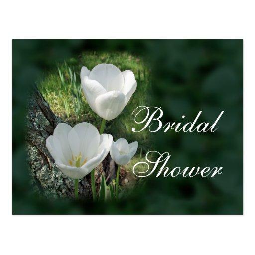 White Tulips Bridal Shower Postcard
