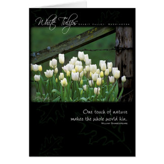 White Tulips by Anna Wight Greeting Cards